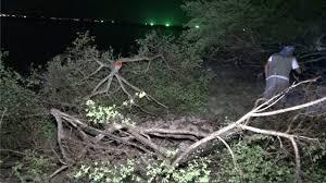 ชาวบ้านเกาะสมุยแจ้งจับคนลอบตัดต้นเทียนทะเล คนร้ายไหวตัวล่องหนท่ามกลางความมืด