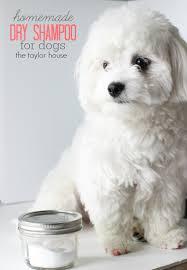 loving my pet diy dry shampoo for dogs