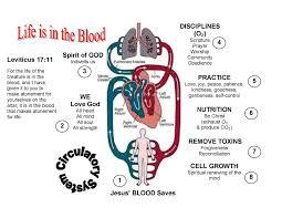 Circulatory System Heart Diagram Worksheet L