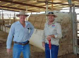 Livestock trucks have been rolling into and out of Cloncurry ...