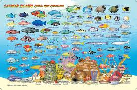 Fish Maps Islands – Card Franko Cayman