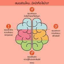 สมองส่วนไหน...มีหน้าที่อะไรบ้าง? . -... - Herbitia ผลิตภัณฑ์เสริมอาหาร  คัดสรรจากธรรมชาติเพื่อคุณ