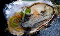 kaizen oysters