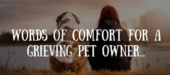 Pet Quotes Fascinating 48 Beautiful Loss Of Pet Quotes Love Lives On
