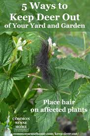 deer repellent for gardens. Contemporary Gardens Hair Clippings On Raspberry Plants To Act As A Deer Deterrent On Deer Repellent For Gardens W