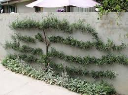 Small Picture 112 best FormowaneTopiary images on Pinterest Garden ideas