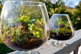 glass terrarium containers ideas