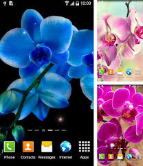 blackberry aurora live wallpapers free android live