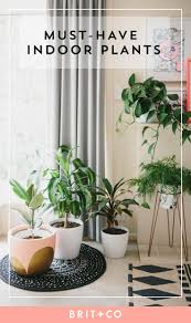 best indoor plants for office. Awesome Cool Looking Office Plants Crazy House Furniture: Large Size Best Indoor For