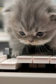 cute kittens sleeping on pianos. Delighful Cute Kitten With Piano For Cute Kittens Sleeping On Pianos Y