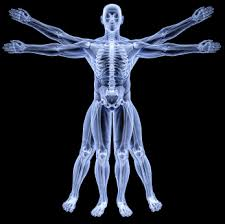 Image result for anatomy