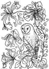 owl pictures to colour in. Perfect Owl Barn Owl And Flowers Colouring Page To Pictures Colour In O