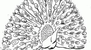 Small Picture Peacock Coloring Pictures 14465 Bestofcoloringcom