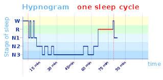 Baby Sleep Cycle Chart Sleep Cycle Wikipedia