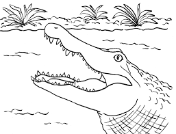 Small Picture Alligator Coloring Page Samantha Bell