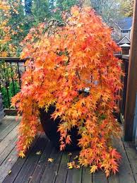 33 best trees for small gardens that