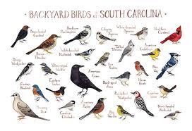 Backyard Birds Of South Carolina Field Guide Art Print