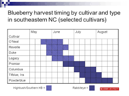 Blueberry Ripening Chart Blueberry Production In North Carolina Bill Cline