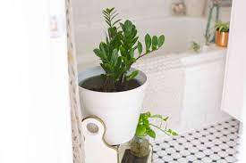 10 Shower Plants That Want To Live In Your Bathroom