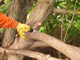 24,319 Tree service Stock Photos, Images | Download Tree service Pictures  on Depositphotos®