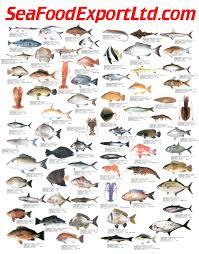Fish Size Chart