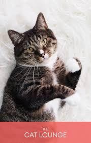 Ver filme completo cats em português sem cortes e sem publicidade. Catflix Cat Cinema Catmosphere
