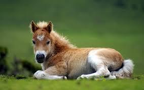 beautiful baby horses wallpaper.  Horses Baby Horse Wallpaper Group With 76 Items For Beautiful Horses