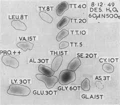 <b>HYPERAMINO</b>-ACIDURIA IN LIGNAC-FANCONI DISEASE, IN ...