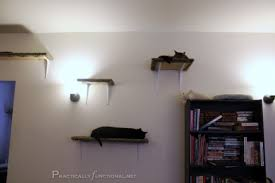 Make your own cat playground out of a wooden board, carpet scraps, L  brackets
