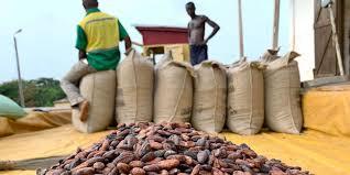 Cacao : la Côte d'Ivoire et le Ghana peinent à augmenter leur part du gâteau