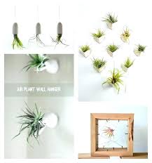 air plant hanger er diy geometric nz air plant hanger diy wall wire