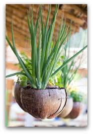 Small Picture Garden Design Garden Design with Intensive Vegetable Gardening In