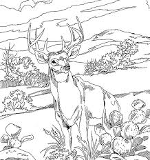 Forest Animal Coloring Page Deer In Forest Drawing At Getdrawings Com Free For Personal Use