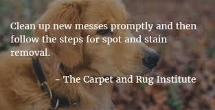 what is the best carpet fiber for pets guys