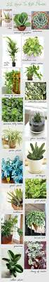 Full Size of Plant:indoor House Plants Beautiful Indoor House Plants Indoor  Plants That Guarantee ...