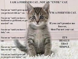 Cat Quotes Enchanting Sick Cat Quotes
