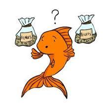 Goldfish Feeding Chart Goldfish Pellets How To Feed Pellets To Your Goldfish
