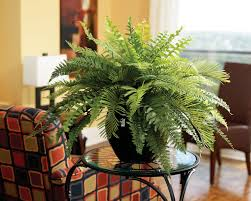 Decoration Beautiful Fake Plants For Living Room Incredible Ideas Decorative Plants For Home