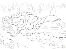 Small Picture Eastern Spotted Skunk coloring page Free Printable Coloring Pages