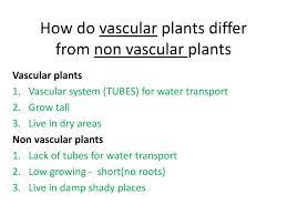 how do vascular plants differ from non vascular plants