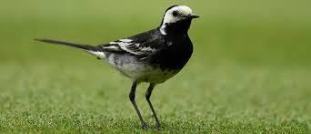 British Garden Birds Chart How Britains Backyard Bird Feeders Are Shaping Evolution