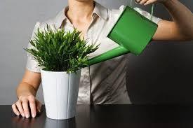 Повечето стайни растения са предназначени да пречистват въздуха и да ни радват със своята красота. 10 Toksichni Stajni Rasteniya Koito Sa Opasni Za Decata I Lyubimcite Ni Agrozona Bg