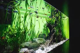 Seachem Planted Aquarium Dosing Chart How Much Co2 Do You Need For A Planted Aquarium