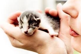 How Much To Feed A Kitten Catster