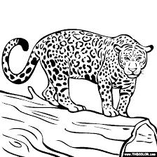 jaguar clipart coloring book 1