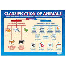 Animal Classification Unlimited Science Animal