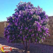 Make Your Yard Look Landscaped Awesome Backyard Trees Landscaping Good Trees For Backyard