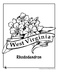 state flower coloring pages west virginia state flower coloring page clroom jr