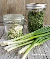 to dehydrate scallions or green onions