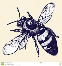 рук чертеж пчелы эскиз насекомого иллюстрация вектора иллюстрации